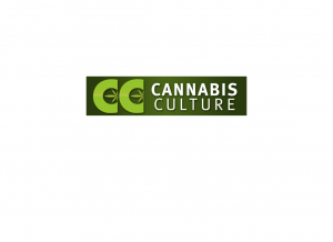 CannabisCulture