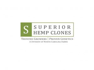 superior hemp clones